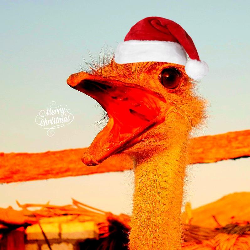 #Aussie #Christmas