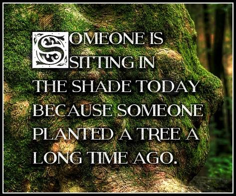 Warren Buffet Quote be kitschig blog Planting Trees