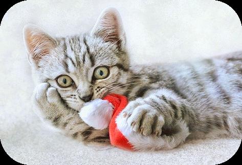 meow Christmas be kitschig blog berlin Weihnachten Chtistmas cat katze