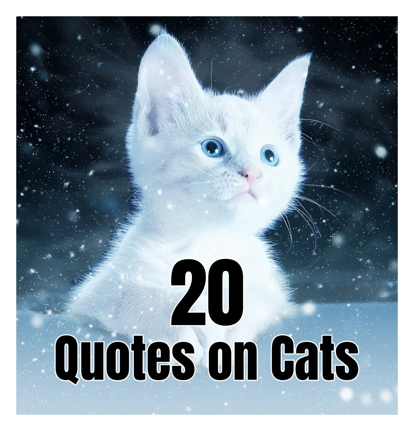 20 super awesome cat quotes be kitschig blog berlin