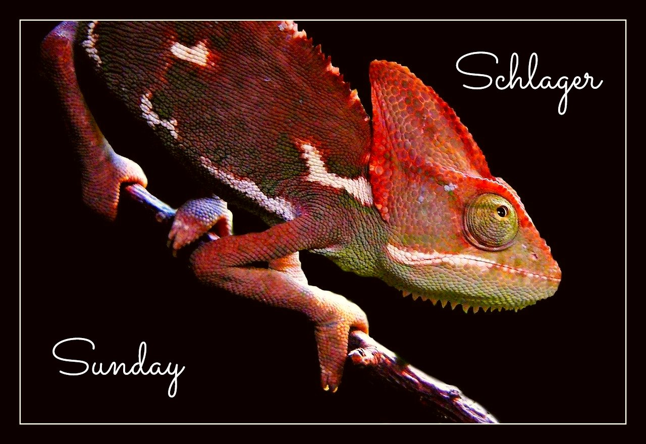 Schlager Sunday Karma Chameleon Culture Club