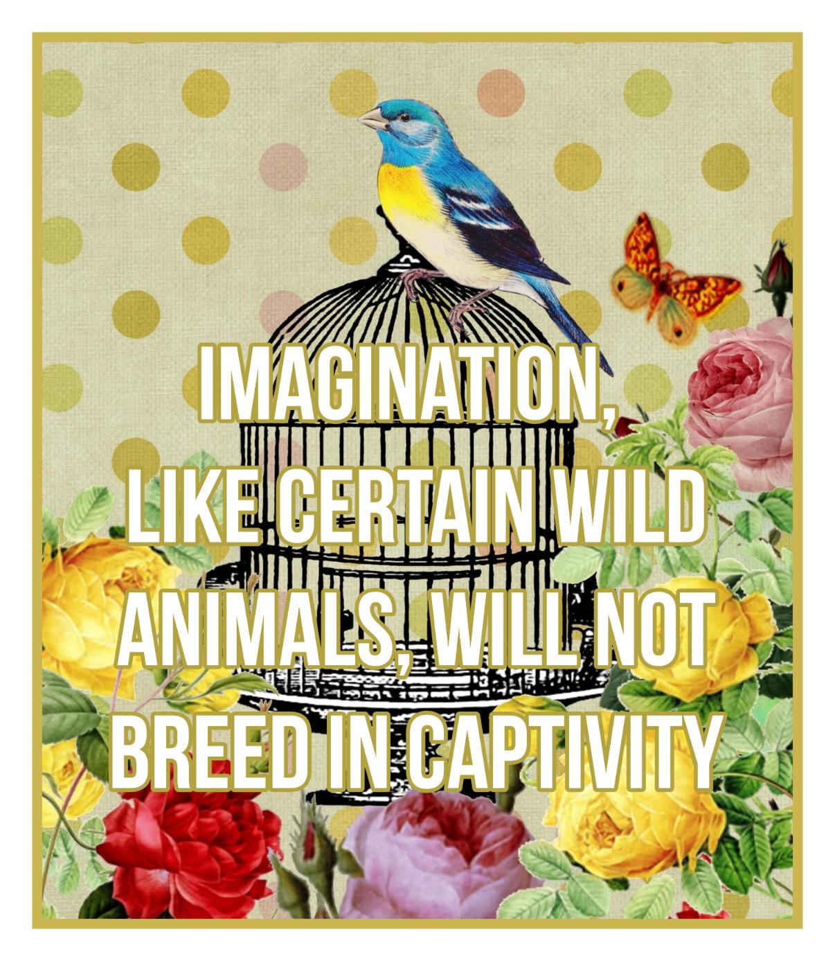 bekitschig blog Imagination like certain wild animals will not breed in captivity George Orwell