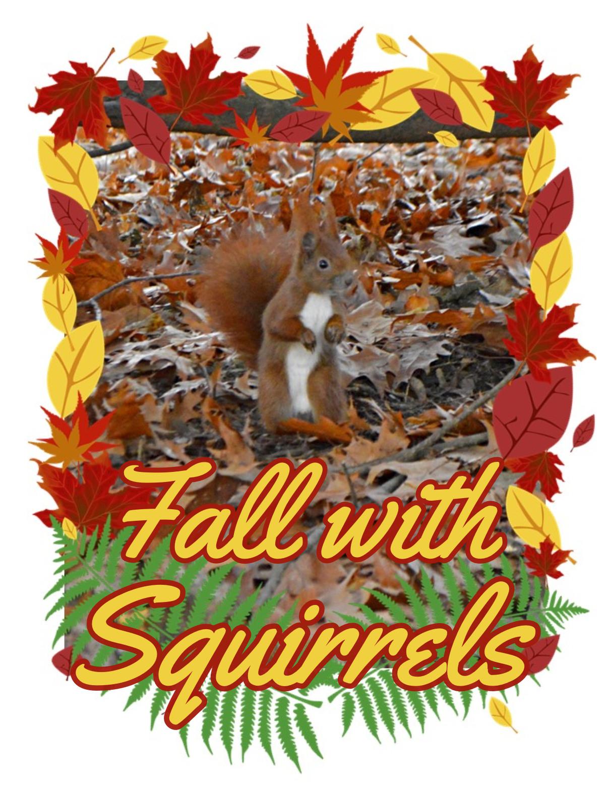 Fall with Squirrels bekitschig blog Berlin Eichhörnchen