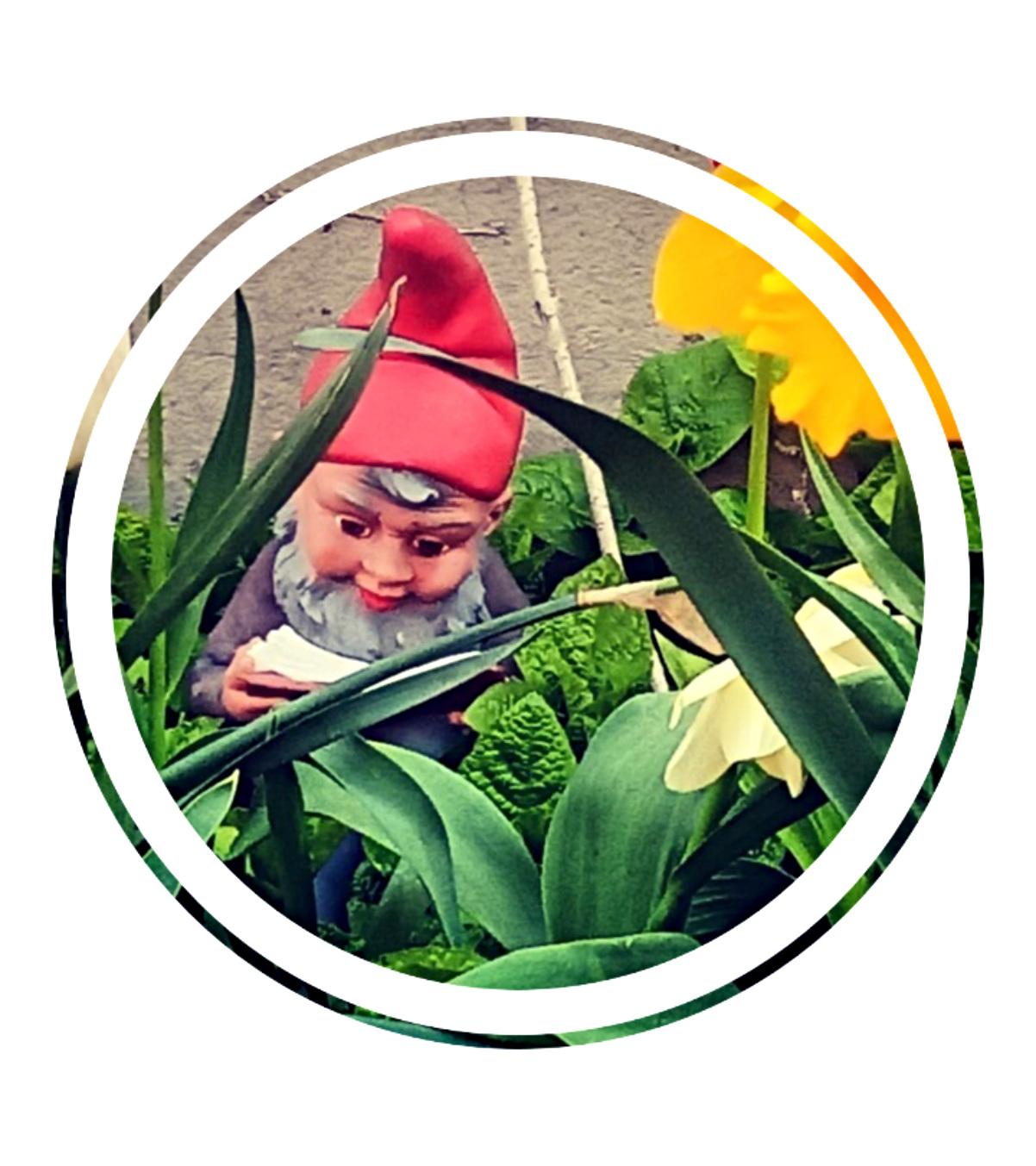 Lesender Gartenzwerg bekitschig.blog reading garden gnome